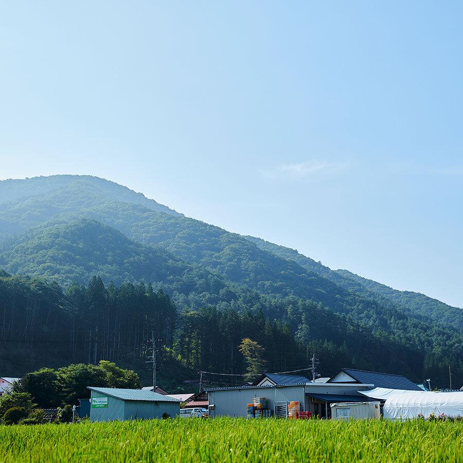 ファームの畑から望むのは、田部地区のシンボル的存在の斎藤山。尾根の重量感が見事。