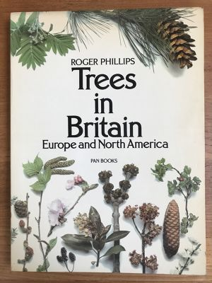 Tree in Britain Erope and North America