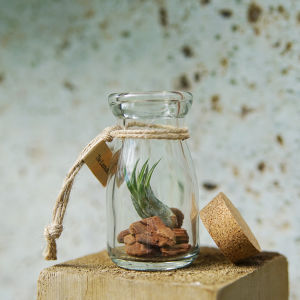 BOTTLE TILLANDSIA WOOD