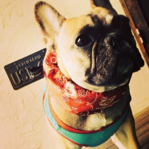 COOL NECK ペイズリー French Bulldog