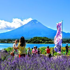 Youth (13-22) Special Price Until August 31st。SPECTACULAR MT FUJI - Lunch Included