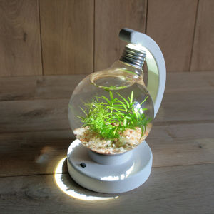 bulb terrarium ball white
