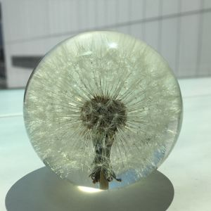 Paper Weight - S / Hafod Grange
