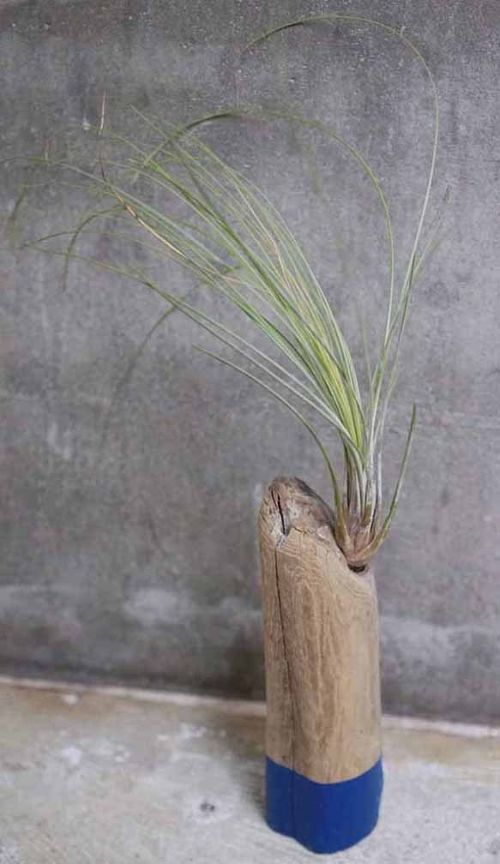 DRIFTWOOD TILLANDSIA STAND Color