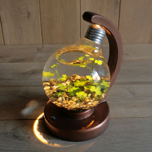 bulb terrarium ball [warm]