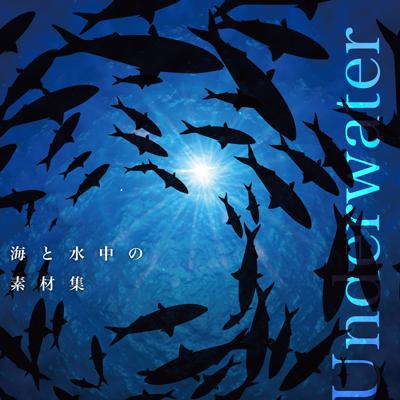 海と水中の素材集(SWST0106)
