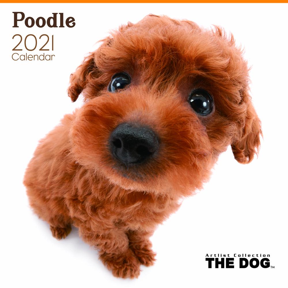 2021年 THE DOGカレンダー【大判サイズ】プードル