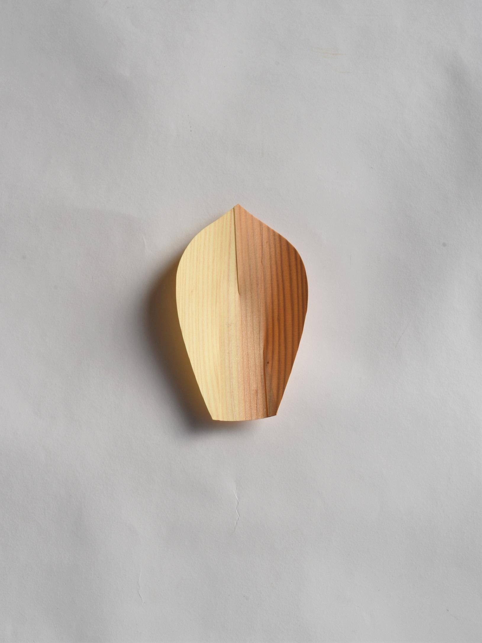 川合優 | 経木の蓮弁皿 中(5枚セット)