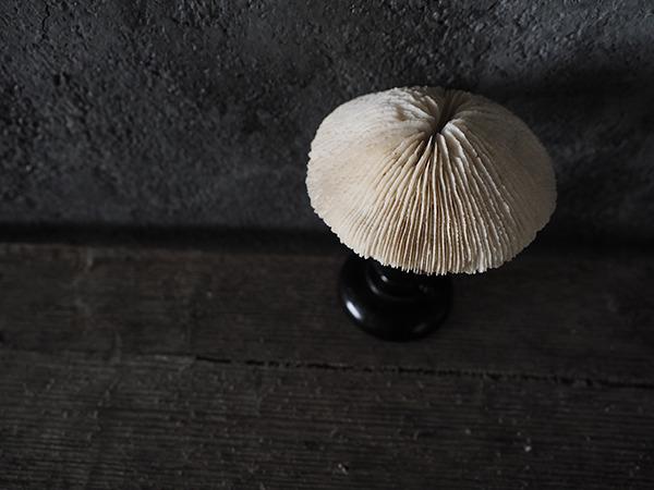 マッシュルームサンゴオブジェ