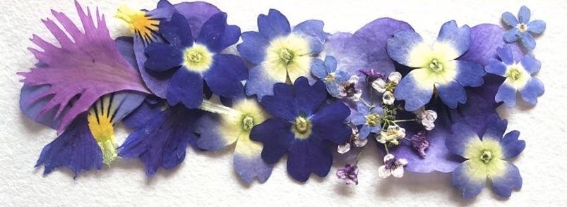 業務用パック DRY EDIBLE FLOWER[ blue mix ]