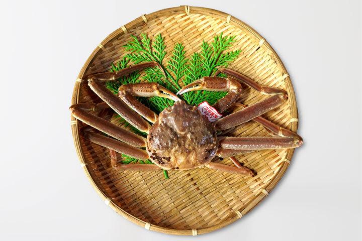 鳥取の冬の味覚「松葉がに」超特大サイズ・タグ付き(1.2kg) 送料無料