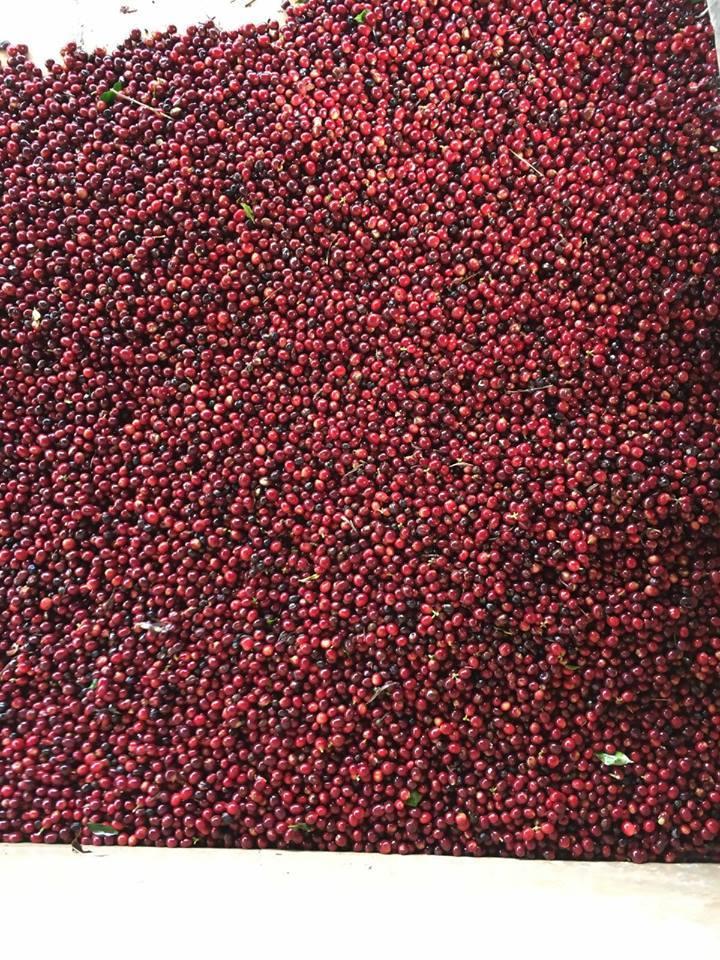 グァテマラ ウエウエテナンゴ ラ プロヴィデンシア農園II パカマラ 100g