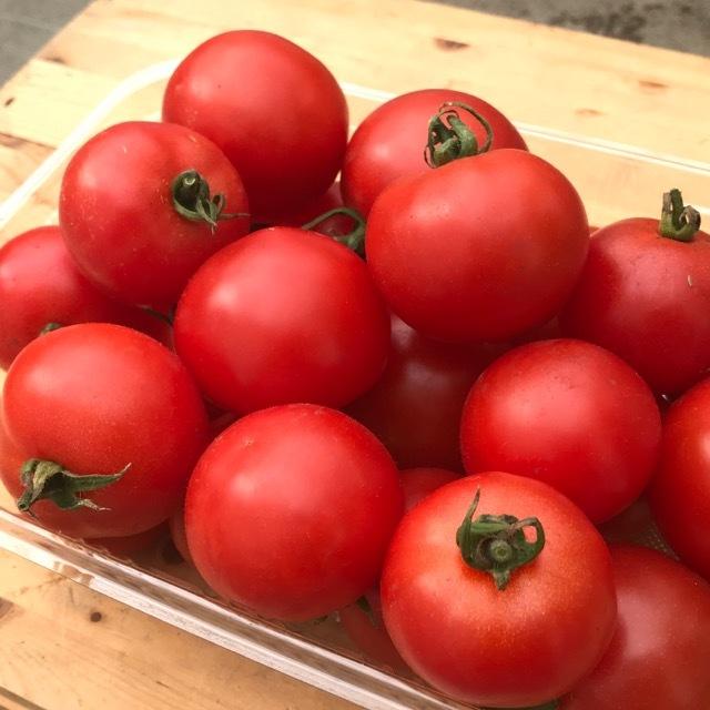 有機無農薬栽培 中玉トマト 1kg ササベジ 送料無料