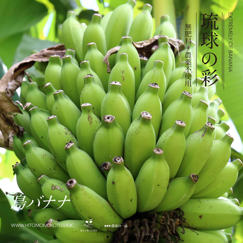 琉球バナナ 《沖縄県 / 自然栽培》