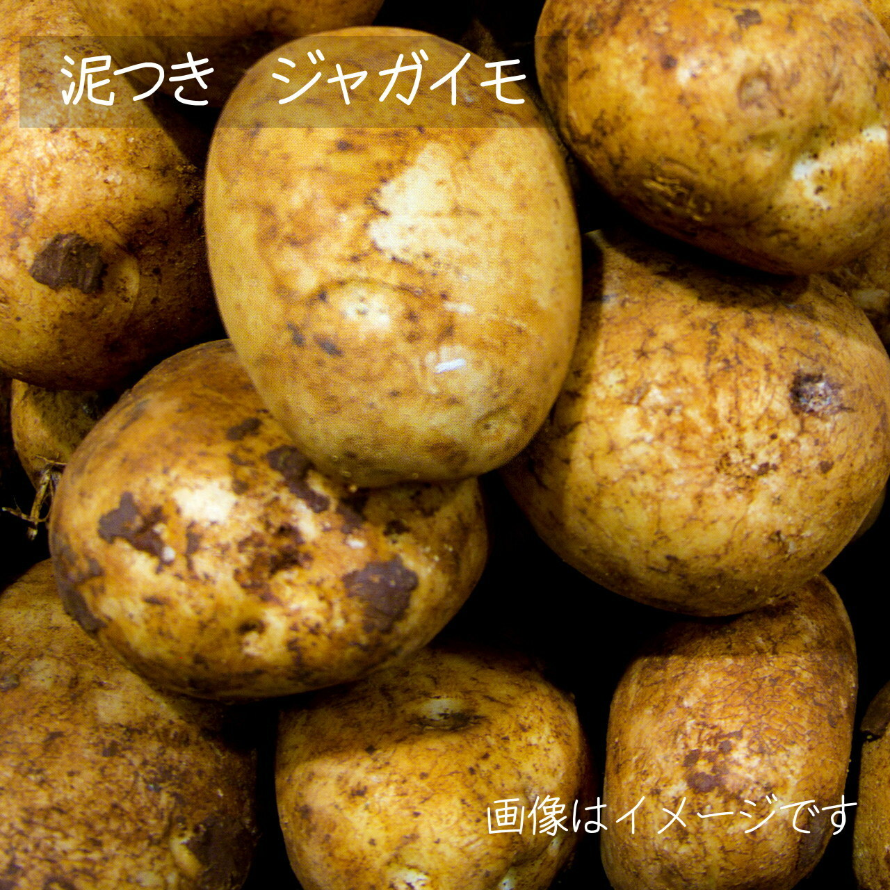 8月の新鮮夏野菜 : ジャガイモ 約600g 8月の朝採り直売野菜 8月17日発送予定