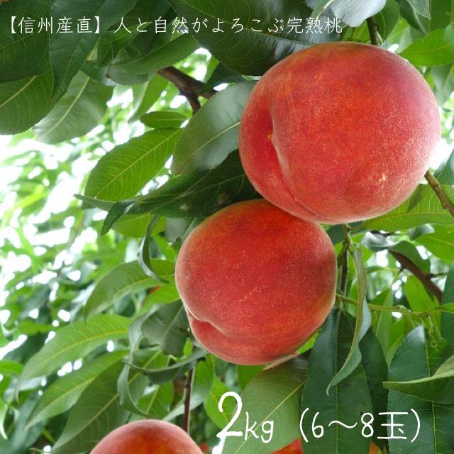 (8月上旬発送開始)人と自然がよろこぶ完熟桃(2kg×6〜8玉)