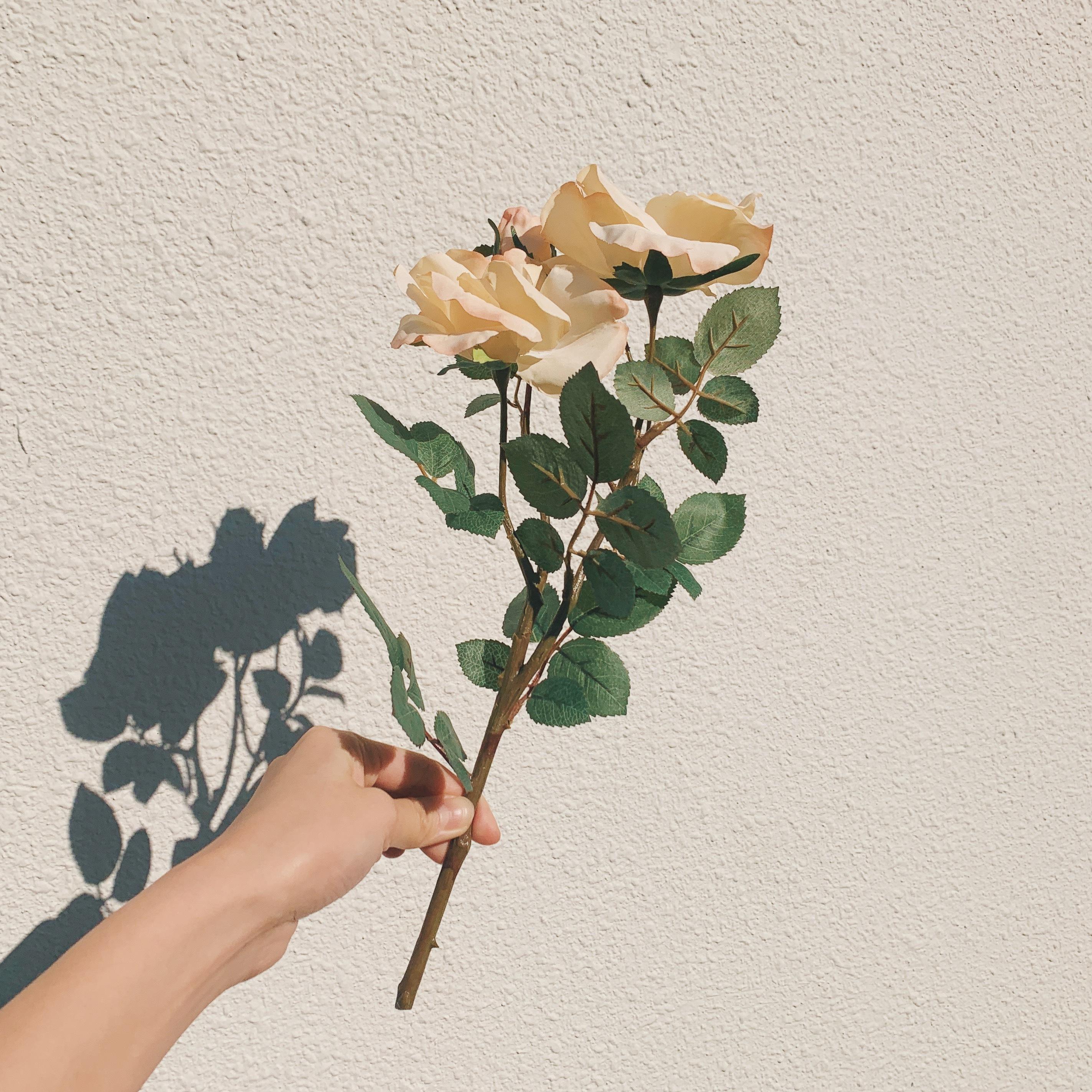 big flower/ベージュローズ