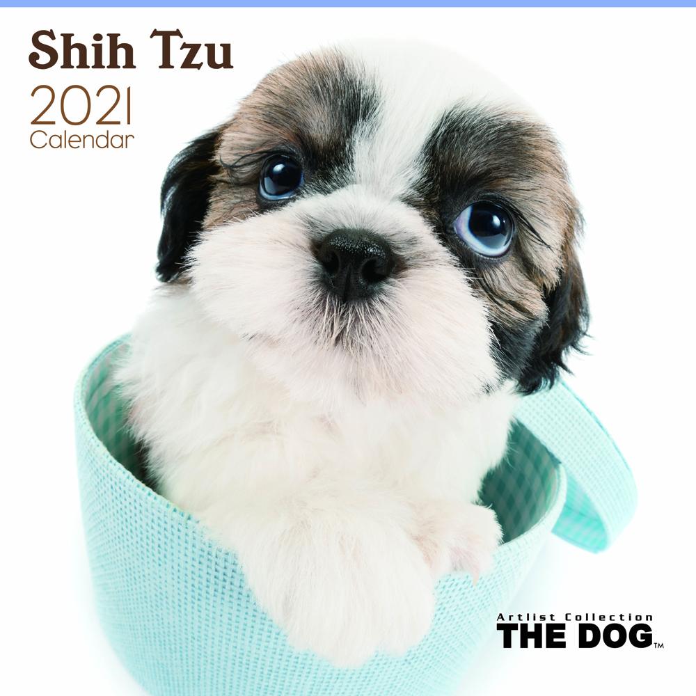 2021年 THE DOGカレンダー【大判サイズ】シー・ズー