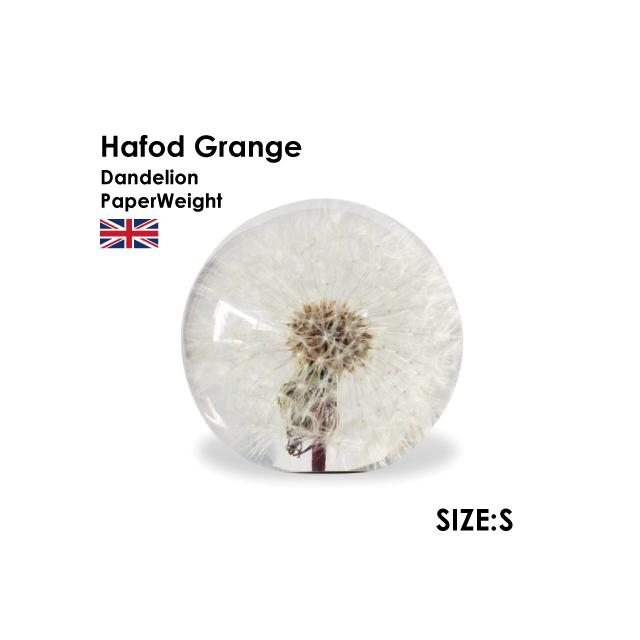 Hafod Grange Dandelon S