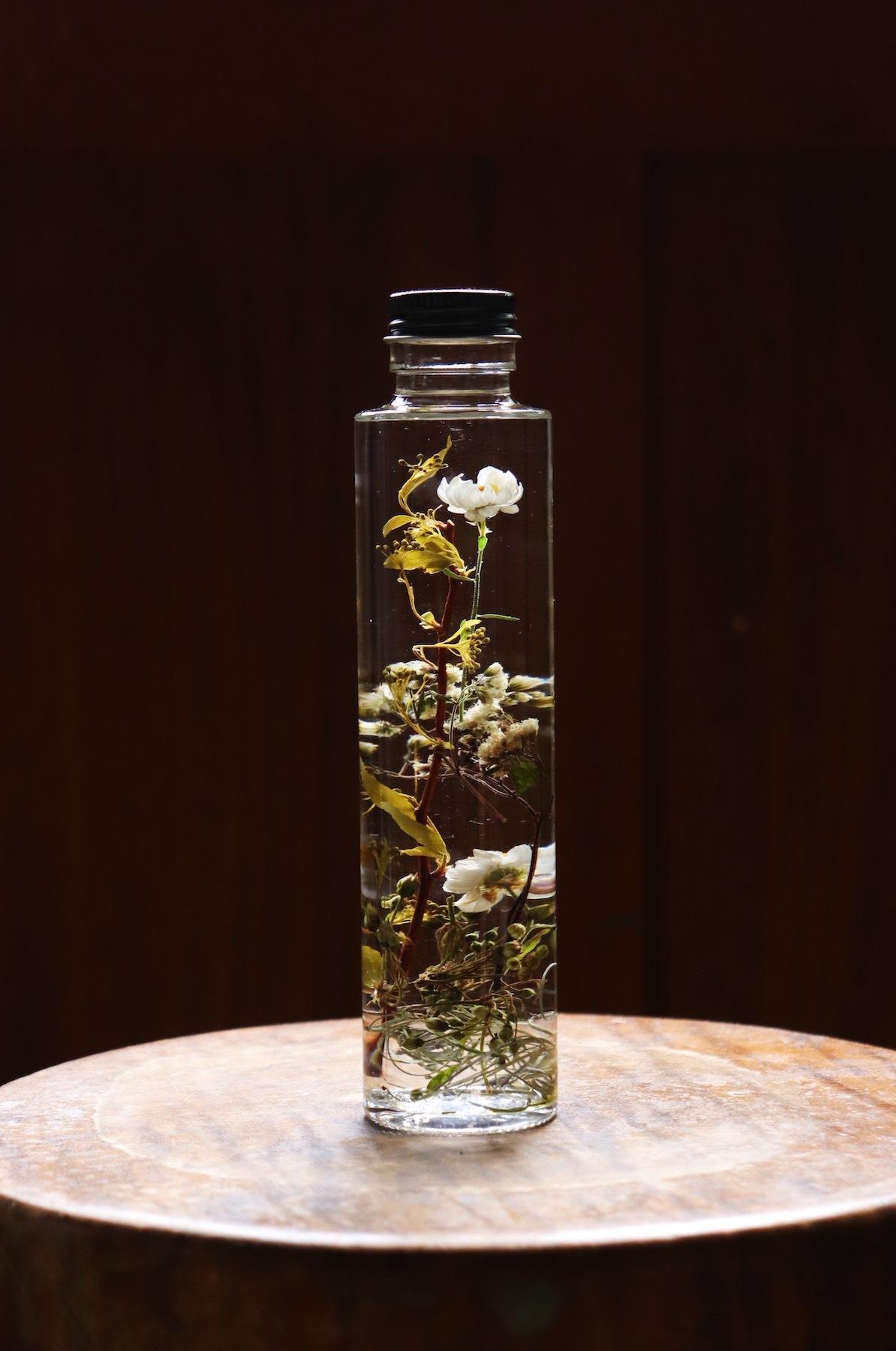 Herbarium6