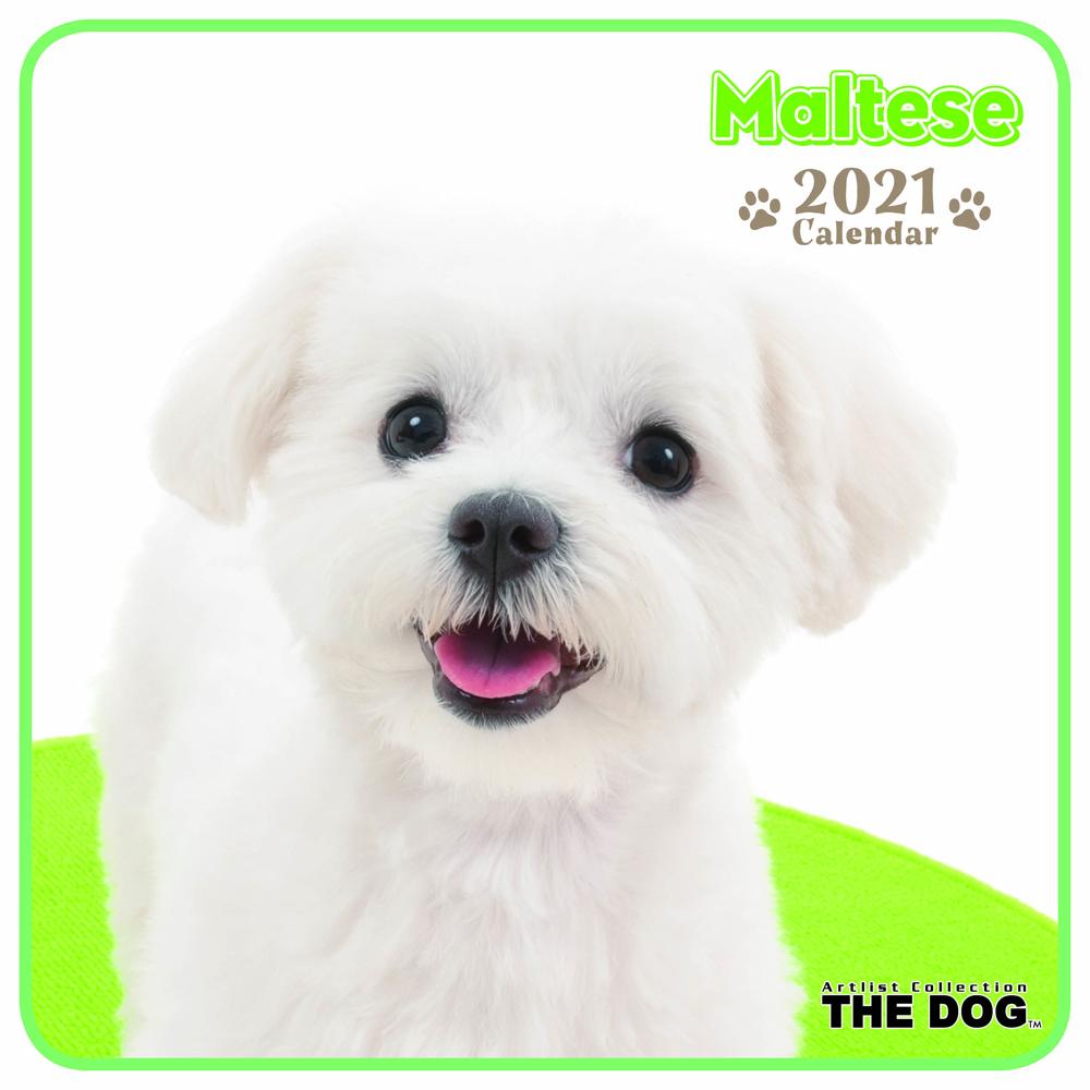 2021年 THE DOGミニカレンダー【ミニサイズ】 マルチーズ(ミニ)
