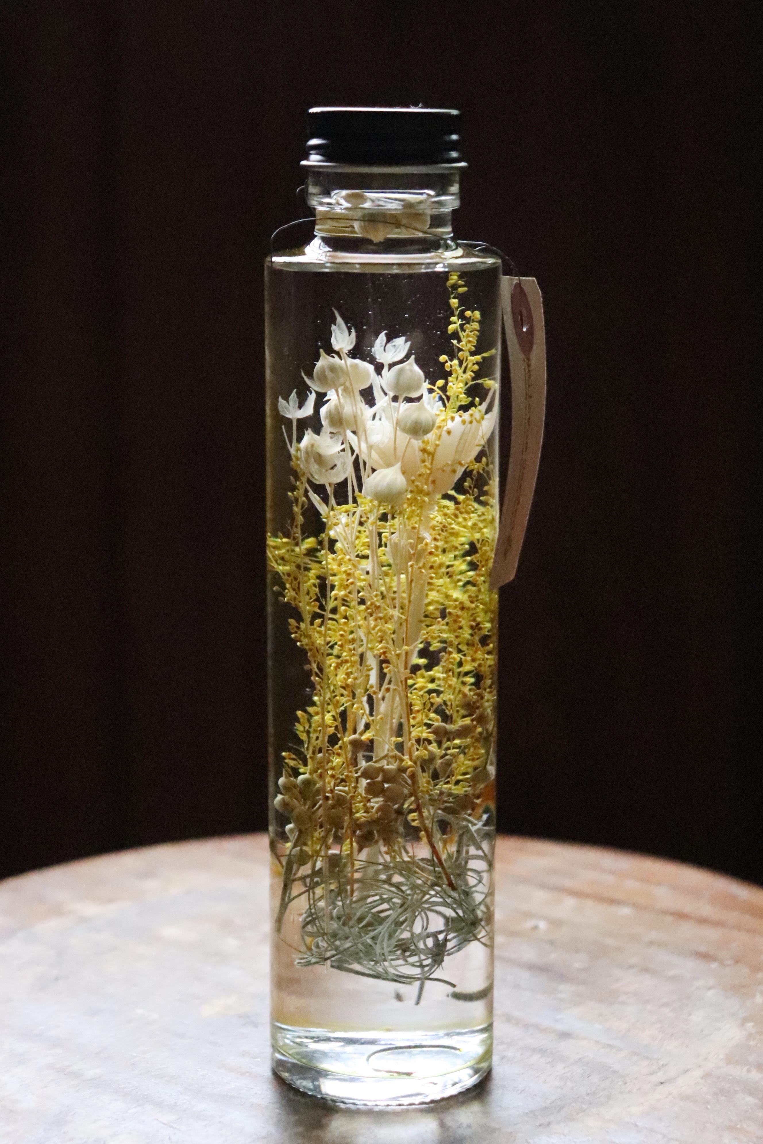 Herbarium12