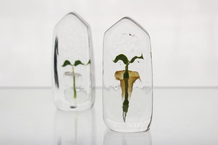 ガラスの種 Home