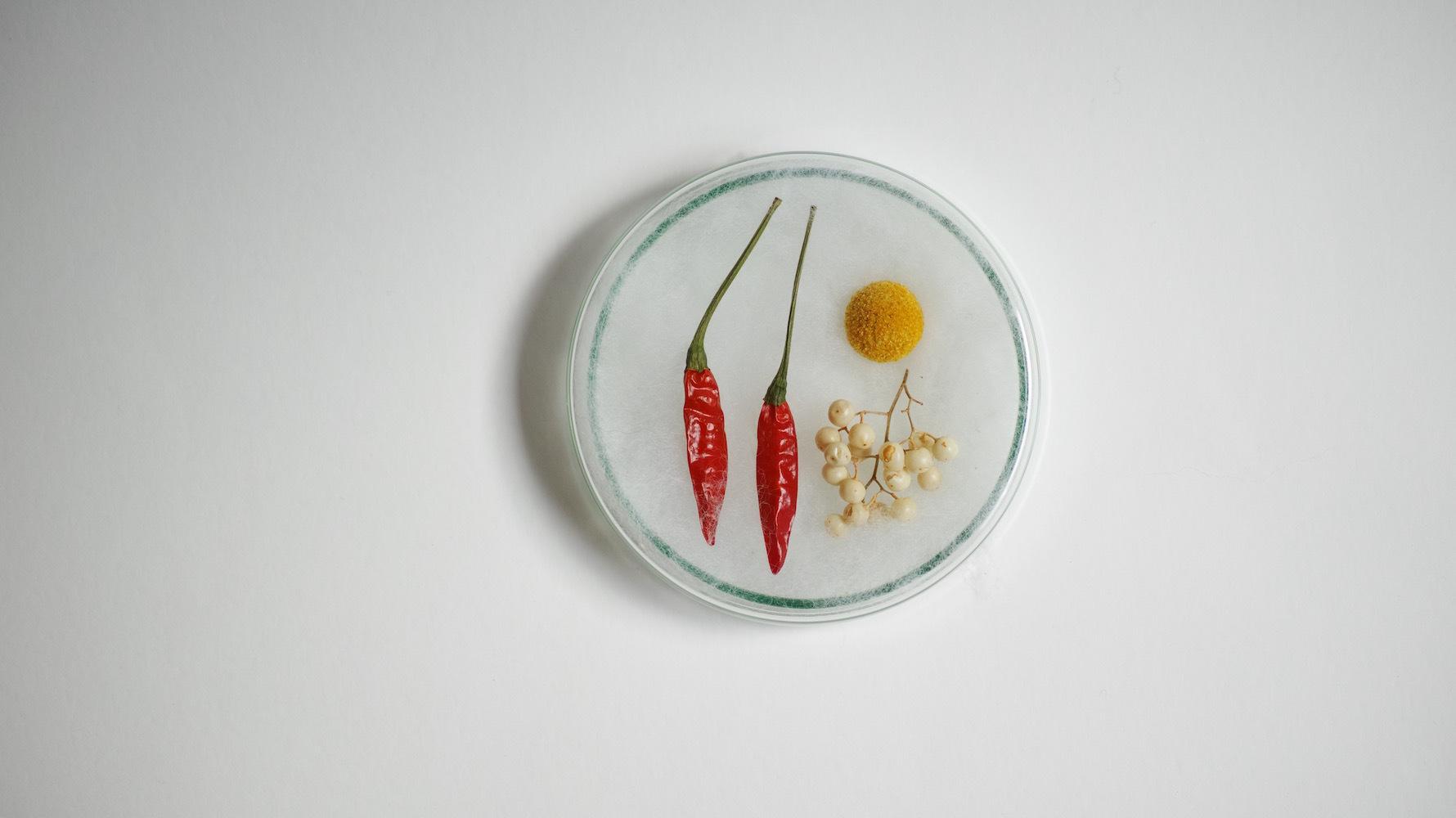植物パーツセットno.02/dry flower set(シャーレ付)