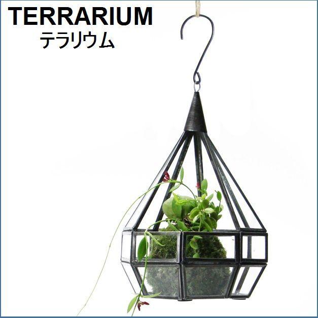 テラリウム用吊り型ガラスケース S