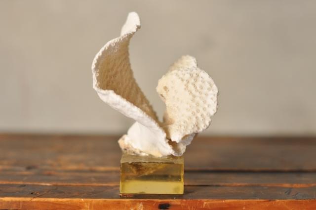 アクリル台白い珊瑚