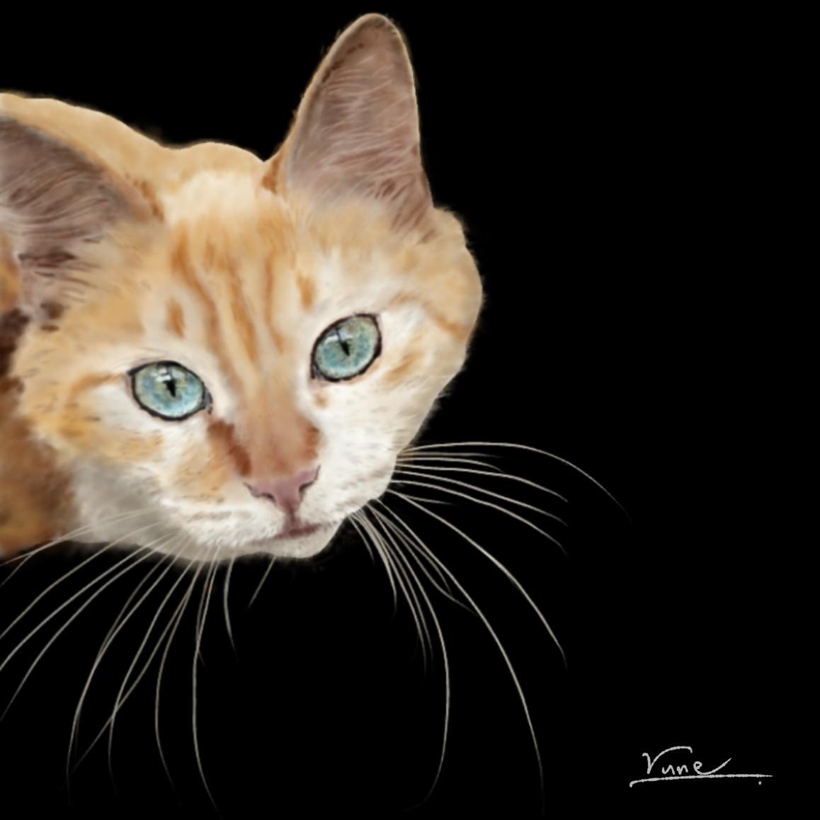 絵画 インテリア アートパネル 雑貨 壁掛け 置物 おしゃれ 猫 動物 デジタルアート ロココロ 画家 : rune 作品 : 見つめる猫