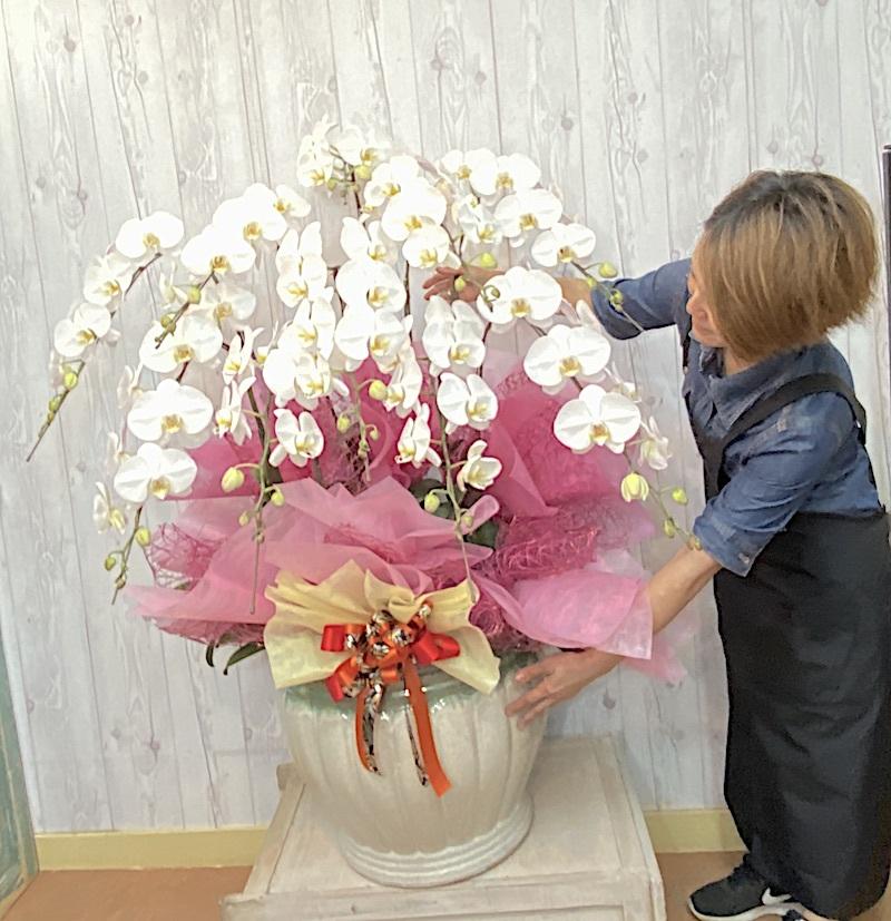特別な贈答品 高級胡蝶蘭