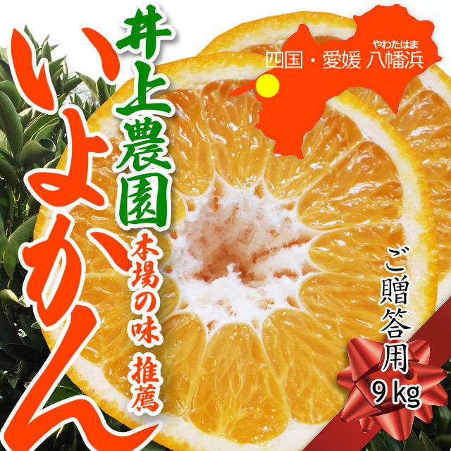 本場西宇和産・井上農園の「いよかん」(ご贈答用 約9kg入り)※1月下旬発送から発送予定