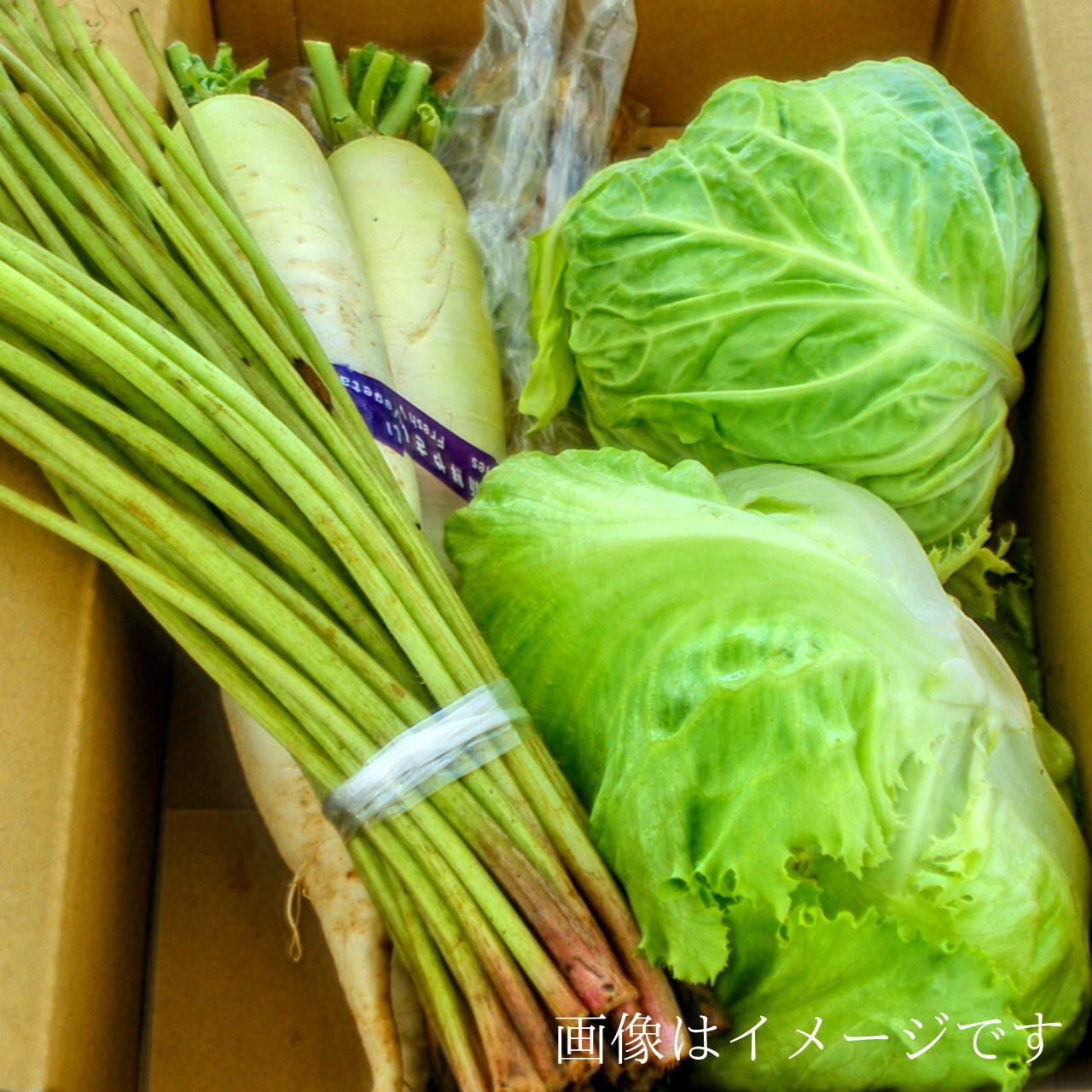 送料無料 6月の朝採り直売野菜セット およそ5点セット 毎週土曜日発送予定  【冷蔵便】