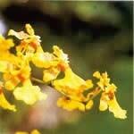 ラブオーキッド[Love Orchid]#15