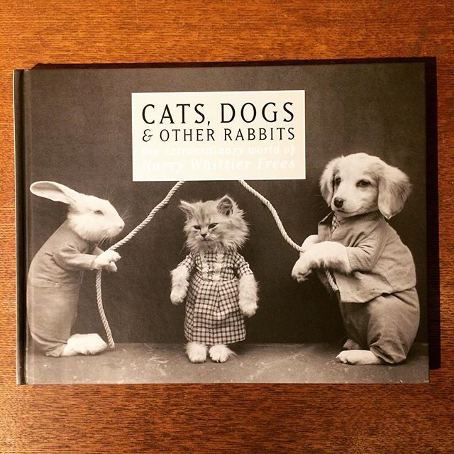 写真集「Cats, Dogs & Other Rabbits/Harry Whittier Frees」 - 画像1