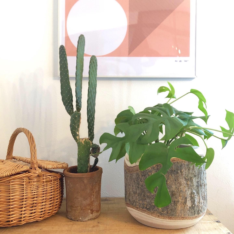 天然木の植木鉢カバー