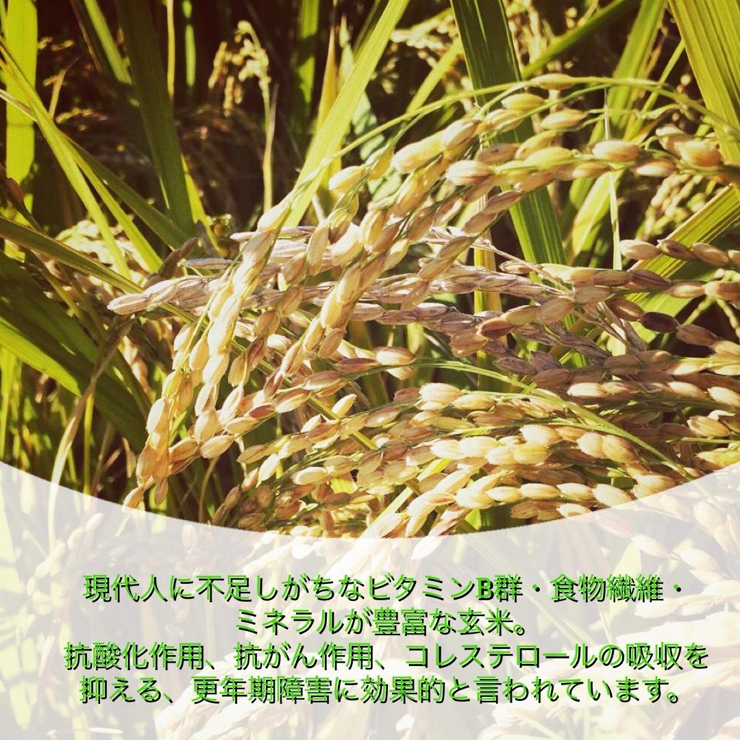 新米 玄米 真空パック 10kg