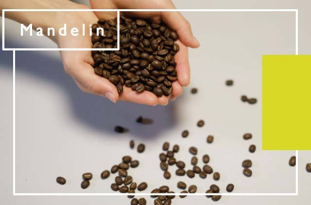 [マンデリン] 水素焙煎珈琲豆