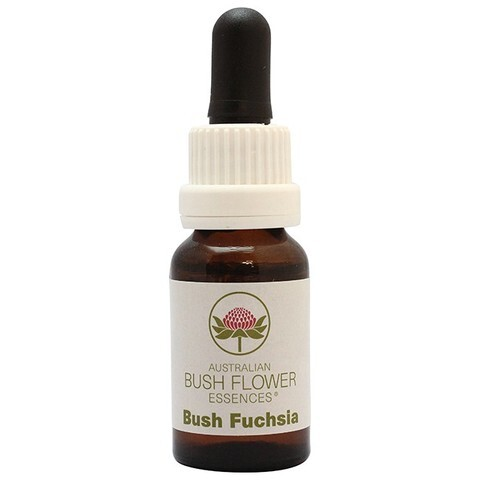 ブッシュフューシャ[Bush Fuchsia]