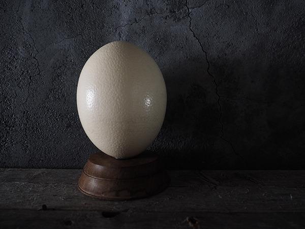 ダチョウ卵