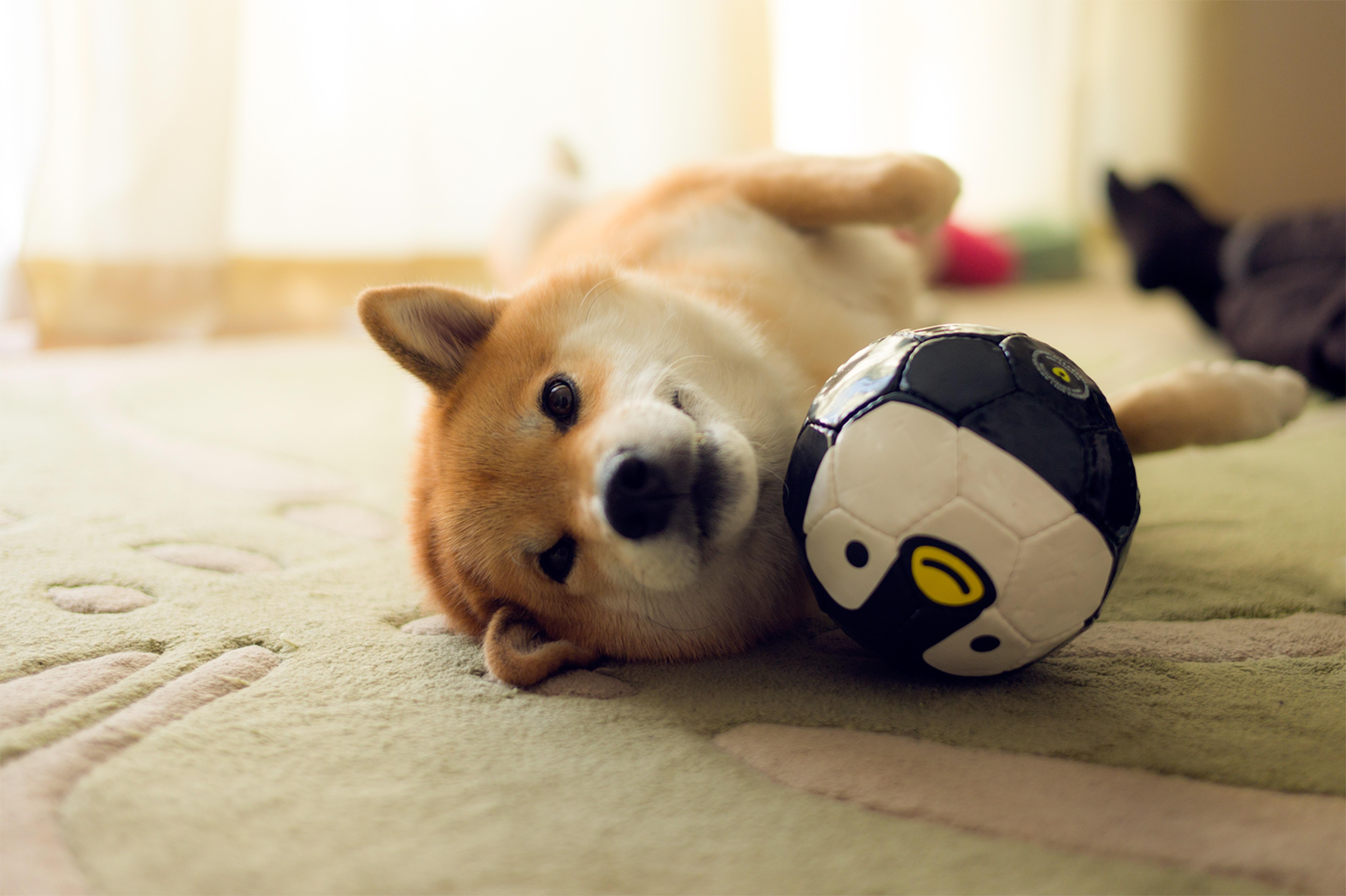 A3ノビ写真 「遊び相手はペンギンさんボール」