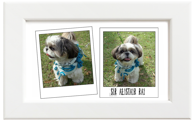 Sir Alistair Rai/サー・アリステア・レイ Evil Eye Protection キッズ&愛犬用スカーフ