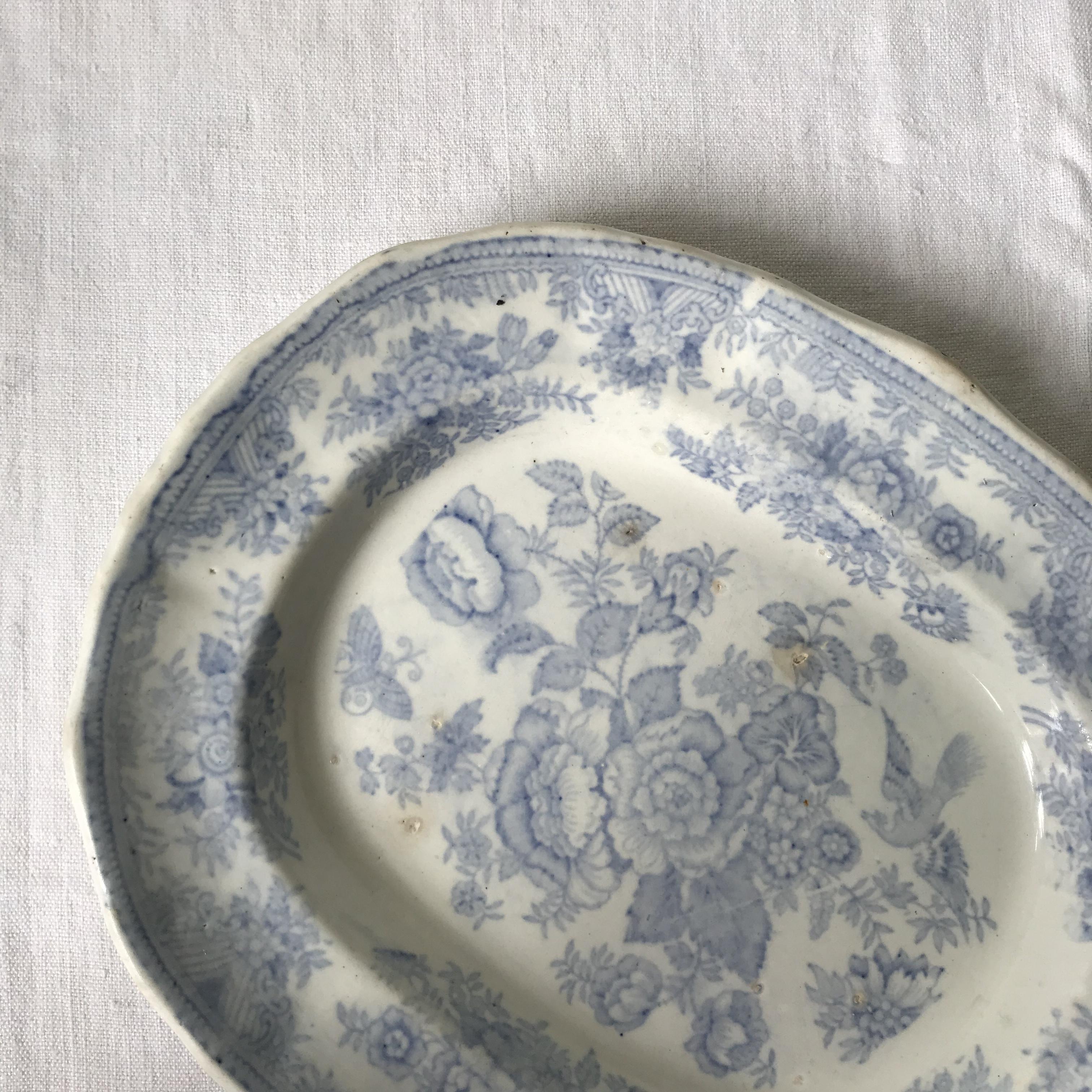 フェザンツのオーバル皿