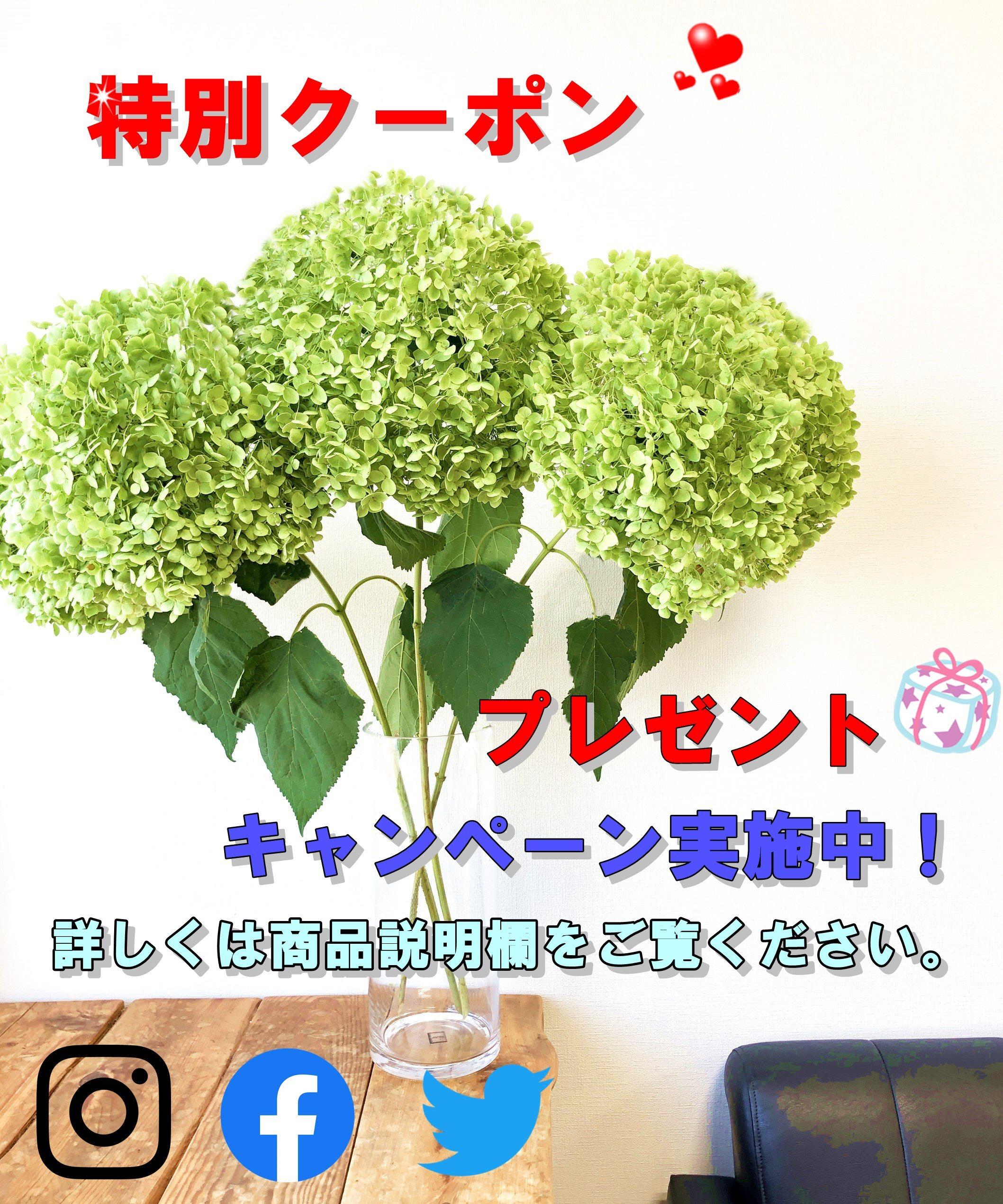 特別クーポン プレゼントキャンペーン実施中!