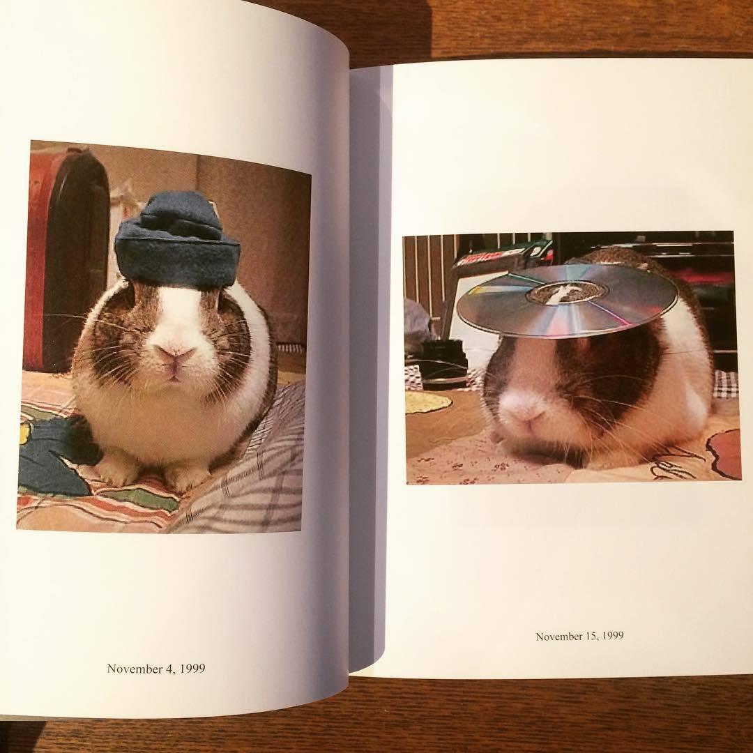 うさぎの写真集「In Almost Every Picture 8 : Oolong/芥川浩典」 - 画像2
