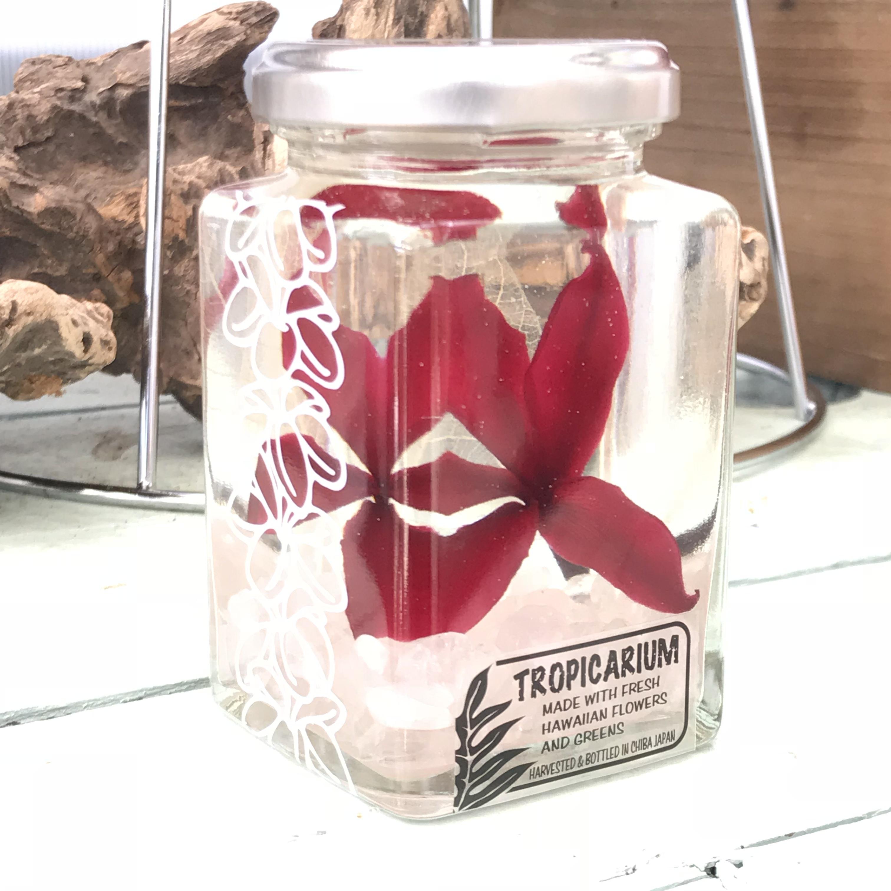 【Hawaiianpaint KANボトル】幸福を呼ぶプルメリアのトロピカリウム クラシックレッド・紅水晶(スクエアボトル・プリザーブド・ローズクオーツ使用)