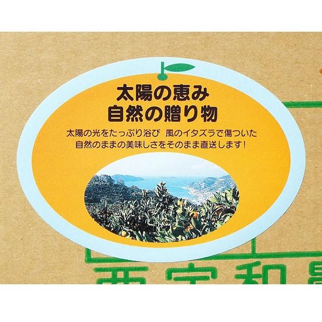 """""""お得"""" 「太陽の恵み(風スレ果)」(ご家庭用・レギュラー品) 10kg入 - 画像3"""