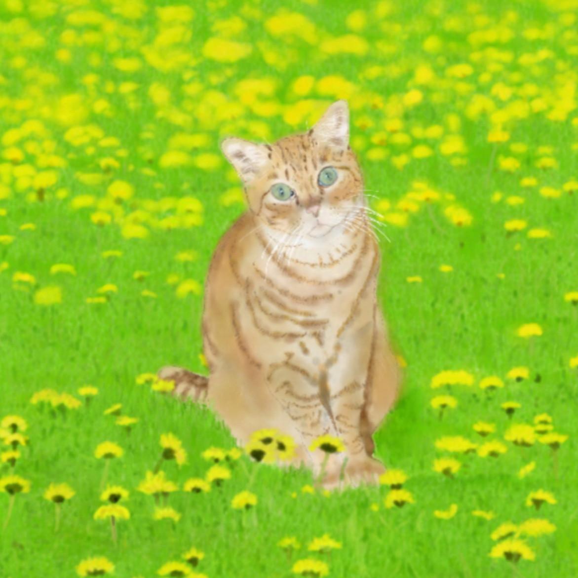 絵画 絵 ピクチャー 縁起画 モダン シェアハウス アートパネル アート art 14cm×14cm 一人暮らし 送料無料 インテリア 雑貨 壁掛け 置物 おしゃれ ネコ ねこ 猫 動物 アニマル キャット  デジタルアート たんぽぽ デジタルアート ロココロ 画家 : rune 作品 : たんぽぽと猫