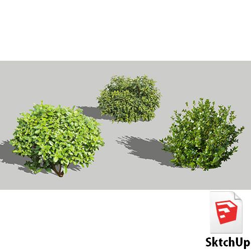 樹木SketchUp 4t_013 - 画像1